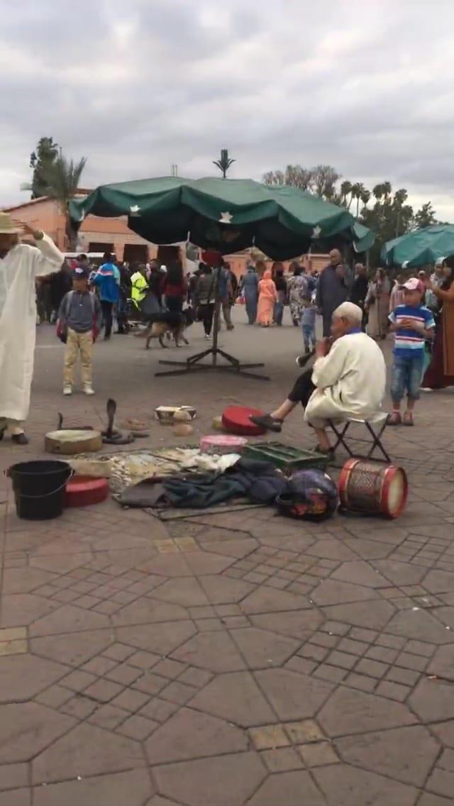 モロッコ 蛇使い
