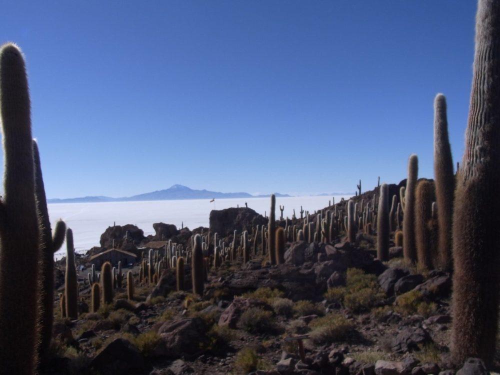 ボリビア ウユニ塩湖 サボテン