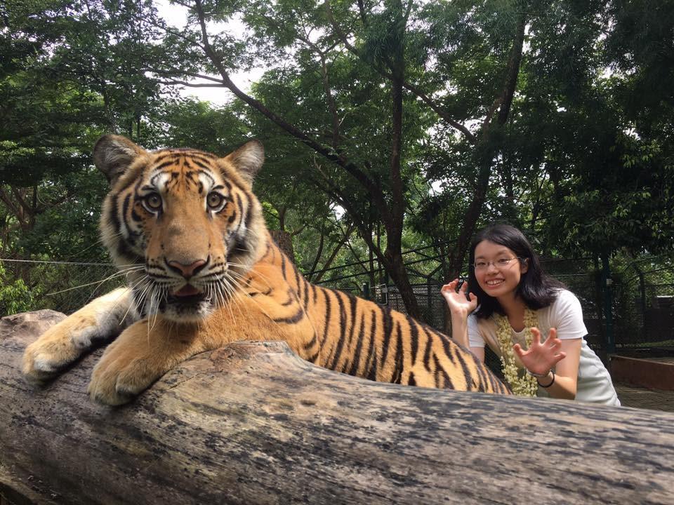 タイ チェンマイ タイガーキングダム
