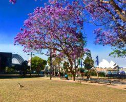 シドニー 気候 春