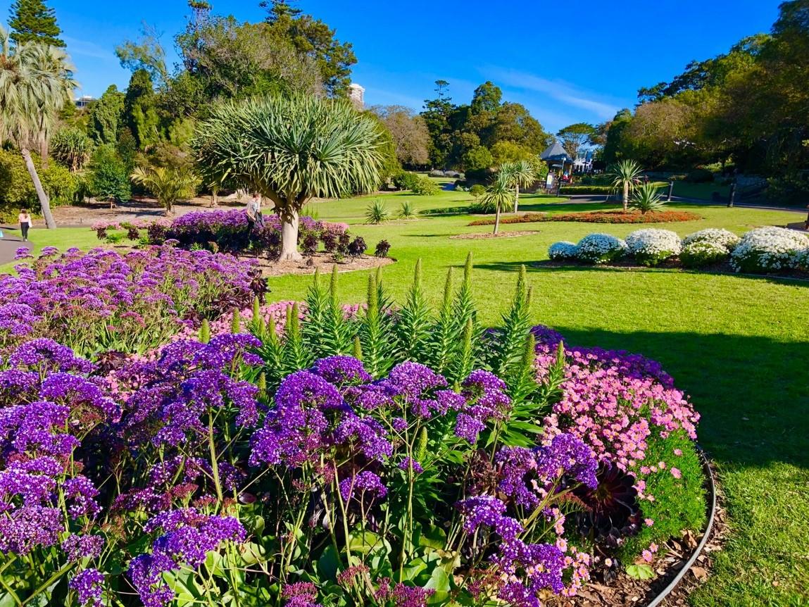 シドニー 王立植物園 ロイヤルボタニックガーデン