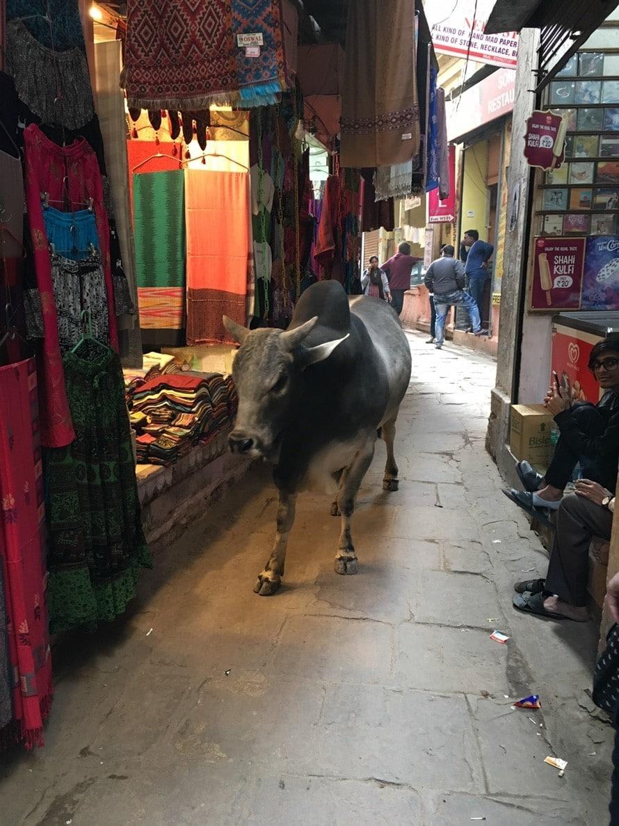 インド 旅行 除菌シート